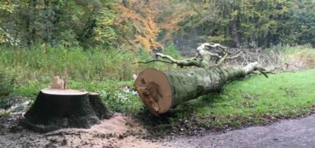 Kap van bosje in Boxmeer stilgelegd door burgemeester na bezwaar omwonenden