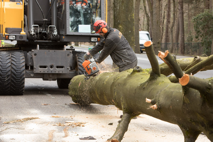 In januari en februari worden zo'n driehonderd bomen gekapt in de gemeente Zeist.