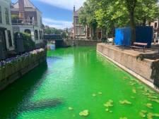 Haagse grachten kleuren oogverblindend groen