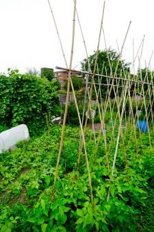 Nijmeegse (73) mag weer voor tuintjes zorgen ondanks 'verwaarlozing'