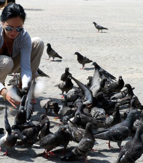 Gemeente Almere roept op om geen dieren te voeren
