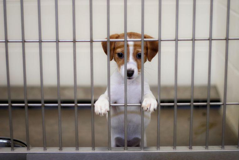 Beeld ter illustratie, geen Black Friday-kortingen bij de verkoop van dieren.