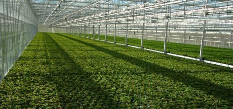 Weer sprake van lichtvervuiling door tuinbouwkassen in Asten