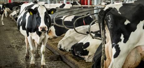 Boeren in Bronckhorst mogen stallen verhogen