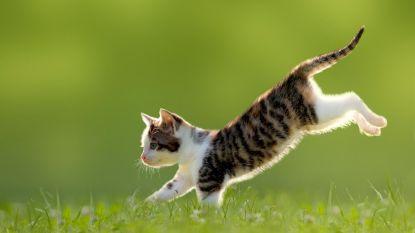U moet uw kat vanaf vandaag verplicht laten steriliseren