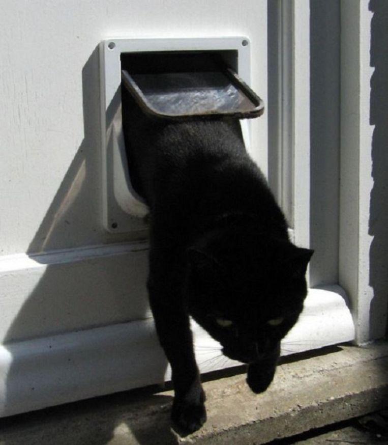 De Britse politie adviseert kattenbezitters om kattenluikjes 's nachts dicht te laten, omdat de 'UK Cat Killer' in de nachtelijke uren opereert.