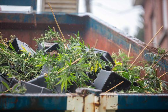 Uit de woning op de Assesteenweg werden maar liefst twee containers gevuld met plantjes.