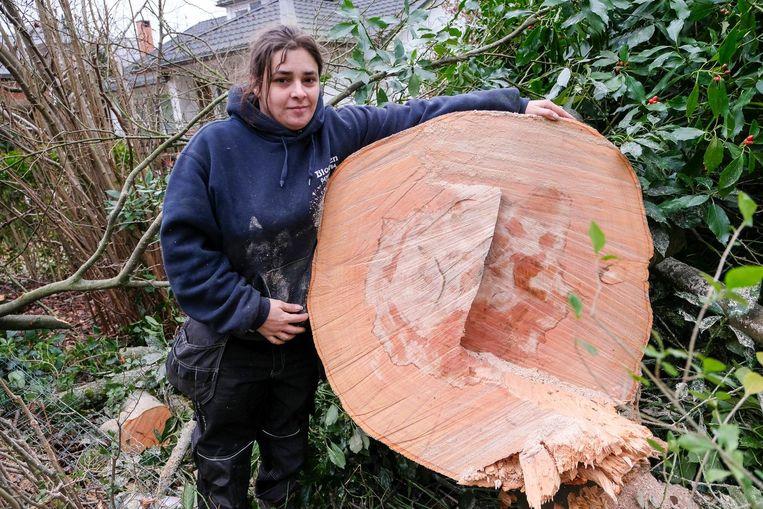 Phillys bij de gigantische stam van de gevallen boom.