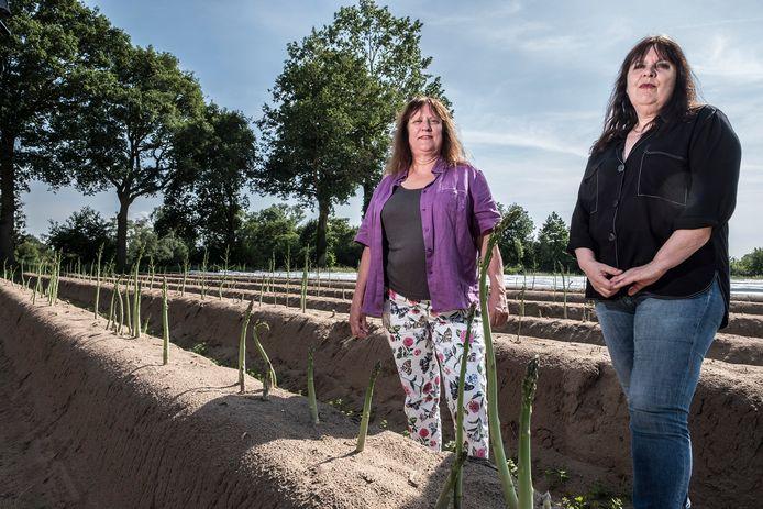 Anneke(links) en Mirjam in het aspergeveld in Milsbeek.