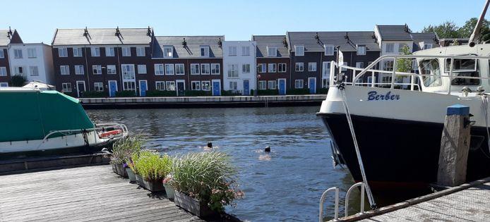 Jongeren zwemmen regelmatig in de haven van Dronten. Geert Eggen is daar niet blij mee.