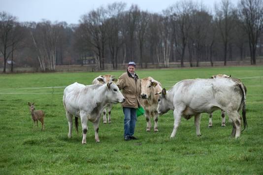 Prutje in de wei bij Appie Verstegen en zijn koeien.