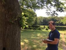 Bomen in Enschede worden bedreigd met kap: 'Maar ze kunnen nog 40 tot 60 jaar mee'