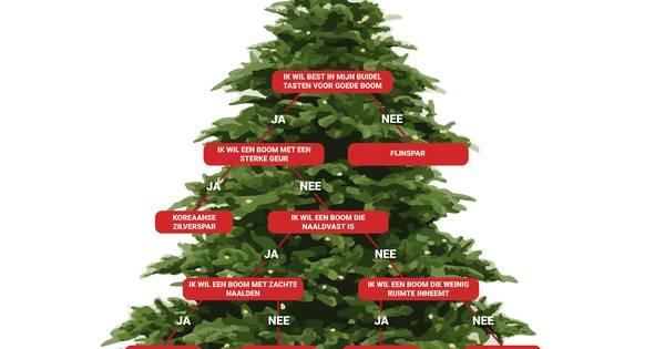 Echte Kerstboom Kopen Lees Dan Eerst Deze Tips Zwolle Destentor Nl
