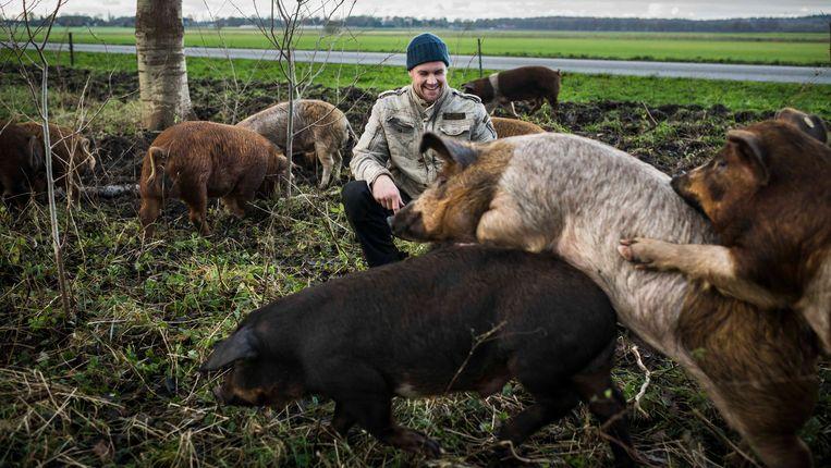 Akkervarkens worden niet gecastreerd. Beeld Kees van de Veen