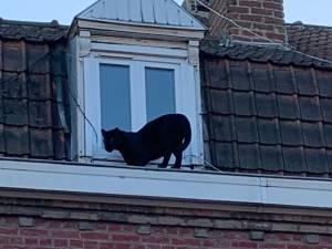 Pourquoi une panthère s'est baladée sur les toits d'Armentières, à la frontière belge