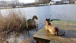 Monster van Loch Almelo? Nederlandse politie vindt 'dinosaurus' in kanaal