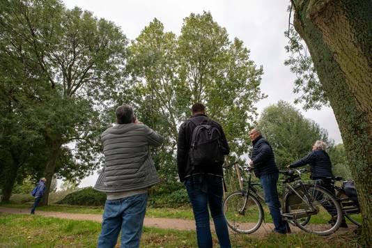 Het nest in Vlaardingen trok gisteren bekijks van passanten.