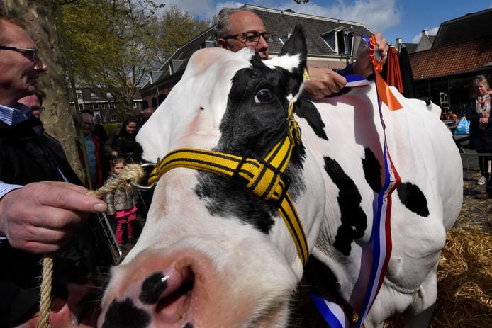 Burgemeester Victor Molkenboer en koe 'Clara 69' op de grote Boerenmarkt in Woerden.