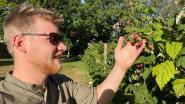 """Lowie Van Nevel opent pop-upbar 'De schuur van Nest': """"Zoveel mogelijk ingrediënten uit eigen moestuin"""""""