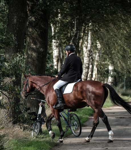 Paardensport van hoog niveau in Varsseveld