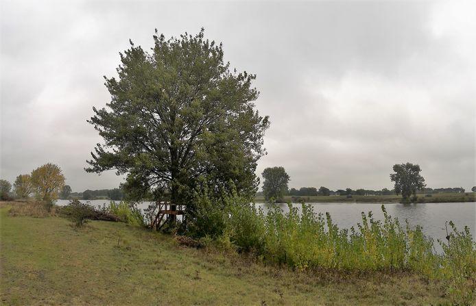 Rond een bakenboom aan de Maas is een uitkijkpunt gebouwd.