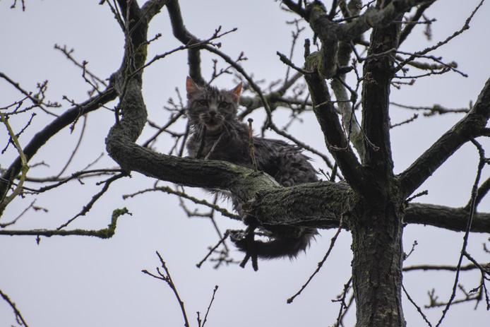 Kitten zit urenlang in boom bij Steenwijk. Brandweer rukt uit met twee voertuigen met hoogwerker om hem te redden
