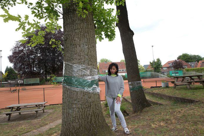 Linda Maatman bij een eik op tennispark De Vijverberg die met folie is omwikkeld. Het plastic - en het dubbelzijdige plakband - moet de processierups een halt toeroepen.
