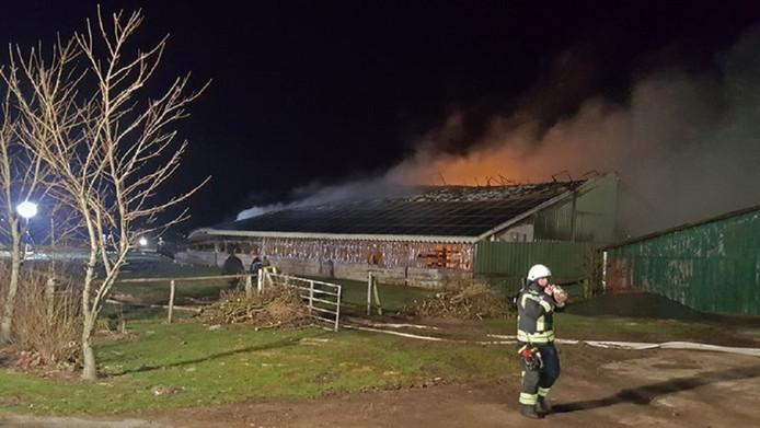 De met zonnepanelen bedekte, brandende veestal in Elpersbüttel. De brandweer kon niets meer doen voor de honderden dieren in het gebouw.
