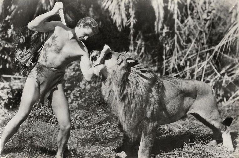 Johnny Weissmuller met leeuw in Tarzan and His Mate (1934) van regisseur Cedric Gibbons. Beeld