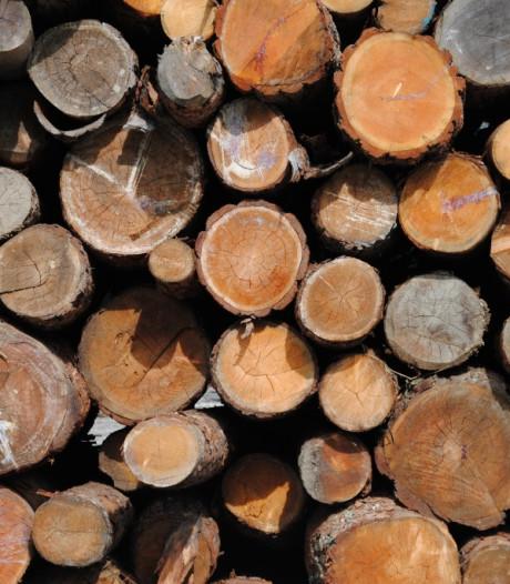 Utrechts Landschap veilt hout van gekapte bomen