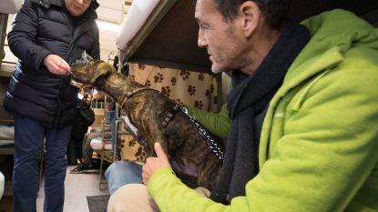 """""""Stichting Prins Laurent heeft al meer dan 300.000 mensen met dieren kunnen helpen"""""""
