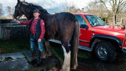 Eigenaar bakt reuzentaart voor brandweer die leven redde van trekpaard Clyde