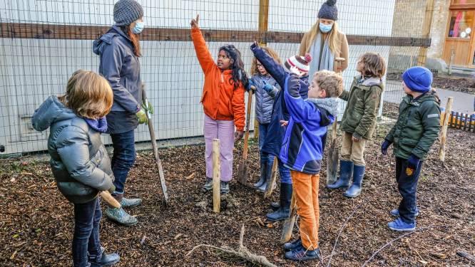"""Steinerschool Koningsdale plant volop groen op de speelplaats: """"Dit is niet alleen belangrijk voor de kinderen, maar voor iedereen"""""""