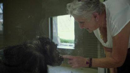Lies (78) bezoekt chimpansee die ze tien jaar in huis had