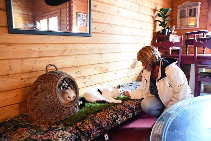 Open dag bij dierenopvang Kattenwoud in Nispen. Trudie Roks kan geen genoeg krijgen van de katjes die in hun eigen villa rusten en kroelen.