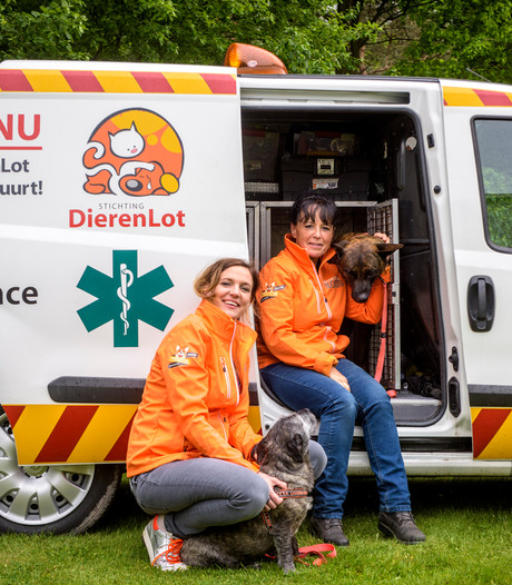 Dutch Cell Dogs helpt asielhonden en gedetineerden