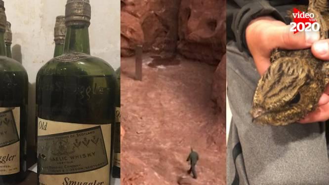 Van 66 illegale flessen whiskey tot vogel met hagediskop: dit waren de leukste onverwachte ontdekkingen in 2020