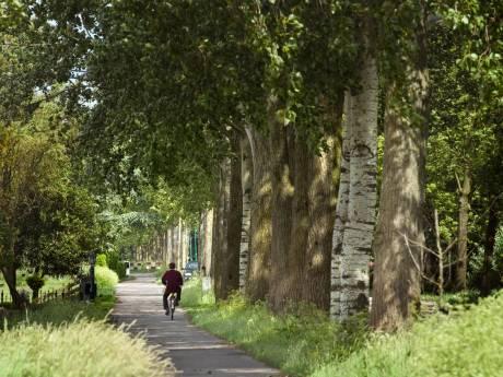 Noodkap en herplant kost Woerden 300.000 euro na grote droogte