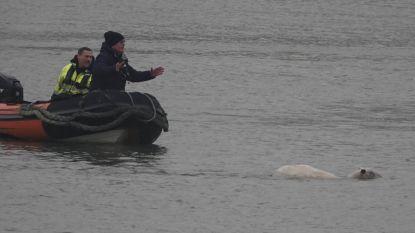 Opvallende beelden! Brandweer en behulpzame vissers brengen hun schaapje op het droge