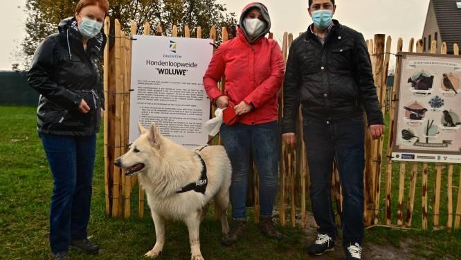 Honden kunnen zich voortaan uitleven in losloopweide Woluwe