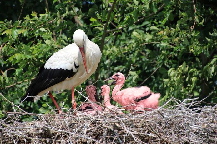 Bij de Avonturenboerderij zouden drie bijzondere vogels zijn geboren.
