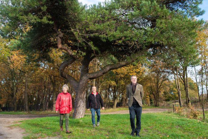 Vlnr Gera Hospers, Piet Hendrickx en Paul Bindels bij de 'luie boom' op De Rith in Breda.