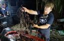 In de maag van deze walvis werd 40 kilo aan plastic afval teruggevonden. Het dier spoelde eerder deze week aan op een strand in het zuiden van de Filipijnen.