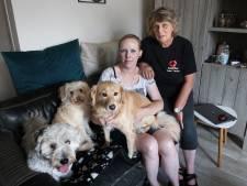 AnimalCare Brabant Zuidoost heeft het extra druk: 'Veel gezinnen kochten in coronatijd zonder goed nadenken een hond'