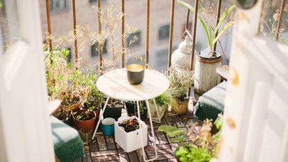 Fleur je balkon of terras eens op met verticale planten