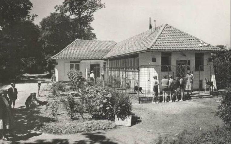 Het Blauwe Kruis in de jaren vijftig.