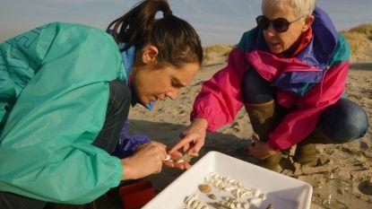 """Maak kennis met SeaWatch-B,  de burgers die onze kustlijn onder de loep leggen: """"Dit geeft véél voldoening"""""""