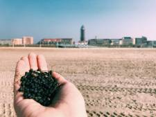 Westland wil samen optrekken met Rotterdam in aangifte tegen strandvervuiler