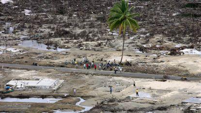 Waarom palmbomen orkanen (bijna) altijd overleven