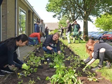Zeeuwland zet tuincursus op poten voor leefbaarheid in dorp en wijk